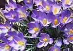 Sonic Season - Spring flowers_150
