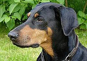 #1_dobie side shot